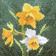 HC494 - Mini Daffodil by John Clayton - Mini Flowers